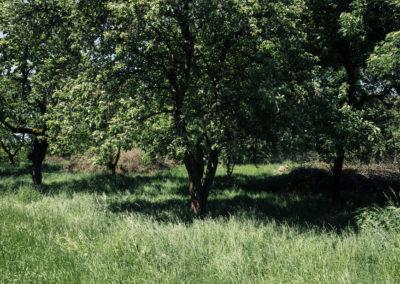 funfhausen obstgarten 002